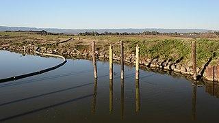 Palo Alto Baylands February 2013 017.jpg