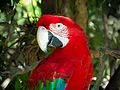 Pantanal Corumbá-MS 02.jpg