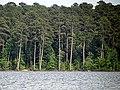 Parkers Creek Jordan Lake NC SP 3755 (36009088671).jpg