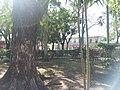 Parque Duarte San Pedro de Macorís.jpg