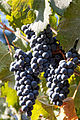 Paseo del Vino Winery (16363780024).jpg