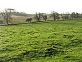 Pastures near Little Whittington (2) - geograph.org.uk - 623560.jpg