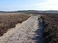 Path across Dibden Bottom - geograph.org.uk - 1286601.jpg