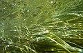 """Paysage subaquatique Subaquatic landscape rivière """"Les Baillons"""" à Enquin-sur-Baillons F Lamiot 20.jpg"""