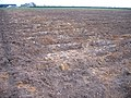 Peat wastage, Black Bush, Whittlesey, Cambs - geograph.org.uk - 154833.jpg