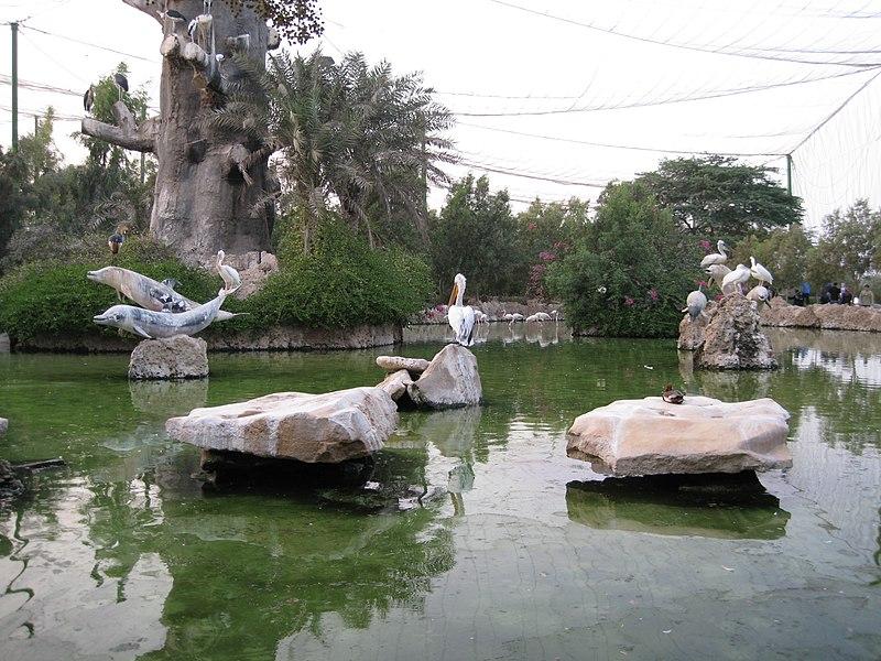 File:Pelicans (2862461968).jpg