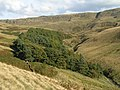 Peter Nook Wood - geograph.org.uk - 247320.jpg