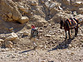 Petra - Bedouins ready to rent you a horse (9778988681).jpg
