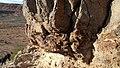 Petrified trunk. - panoramio.jpg