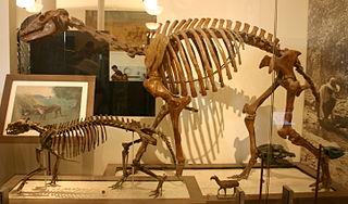 <i>Macrauchenia</i> genus of mammals (fossil)