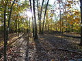 Pierrepont State Park whitewoods.jpg