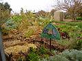 PikiWiki Israel 18710 Herbs garden in Kibbutz Lotan.JPG