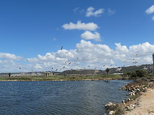 Ma'ayan Tzvi - Image: Piki Wiki Israel 38115 Nature and Colors