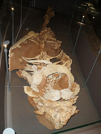 Pinacosaurus - P. mephistocephalus skeleton