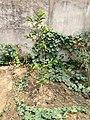 Plants in Sector 29 Faridabad.jpg