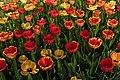 Poertschach Johannes-Brahms-Promenade Blumenstrand Tulpenbeet 22042015 2544.jpg