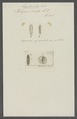 Polynoë cirrata - - Print - Iconographia Zoologica - Special Collections University of Amsterdam - UBAINV0274 102 02 0020.tif