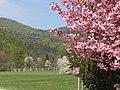 Pomlad 2009 (3447465804).jpg