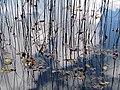 Pond Cameron NC 3851 (15568872530).jpg