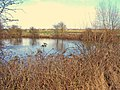 Pond near Campville House - geograph.org.uk - 1776856.jpg
