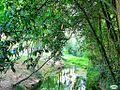 Pontevedra-Río Gafos 07 (3970237750).jpg