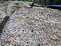 Porphyritic granite (Giants Range Batholith, Neoarchean, 2.67-2.68 Ga; Rt. 1 roadcut north of the South Kawishiwi River, Minnesota, USA) 1 (21254548028).jpg