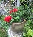 Pot with geranium.jpg