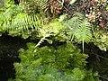 Pražská botanická zahrada, Fata morgana - panoramio.jpg