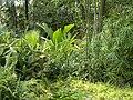 Pražská botanická zahrada - panoramio (7).jpg