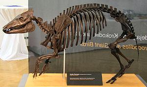 Propalaeotherium - Restored P. hassiacum skeleton