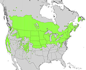Prunus virginiana range map.jpg