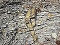 Pseudo-clastic dike (Vinton Member, Logan Formation, Lower Mississippian; Rt. 16 roadcut northeast of Frazeysburg, Ohio, USA) (23980273327).jpg