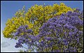 Purple Yellow Blue at Grafton-2 (22642051766).jpg