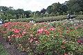 Queen Mary's Gardens IMG 4386.jpg