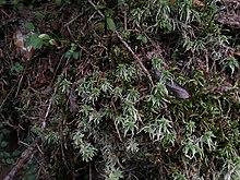310cf05a4da Siněvir (národní přírodní park) – Wikipedie