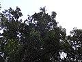 Radiočki rastenija vo maj 2013 G (76).JPG