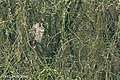 Ransuil-1 (28615323686).jpg