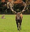 Red Deer Poing.JPG
