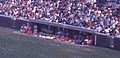 Reds dugout during 1970 game at Wrigley Field vs Cubs.jpg