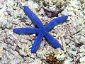 Reef4446 - Flickr - NOAA Photo Library.jpg