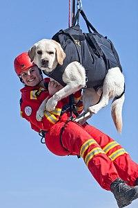 dressage chien wikipedia