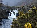 Rheidol Falls - geograph.org.uk - 908462.jpg