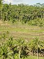 Rice terrace of Tegallalan 200507-4.jpg