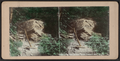 Rip Van Winkle Rock, Catskill Mts, from Robert N. Dennis collection of stereoscopic views.png