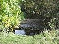 River Windrush downstream from dovecote - geograph.org.uk - 1556343.jpg