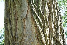 Is Wisteria Bark Poisonous To Dogs