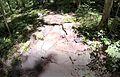Rocky Knob (rock garden).jpg