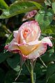 Rose, Garden Party - Flickr - nekonomania (7).jpg