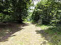 Route forestiere du bois belle fille 1.JPG