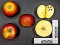 Rubinella (apple) jm135744.jpg